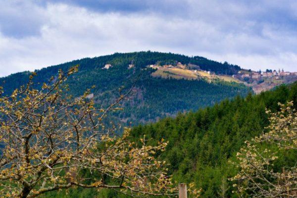 Le Mont Besset blotti dans la forêt